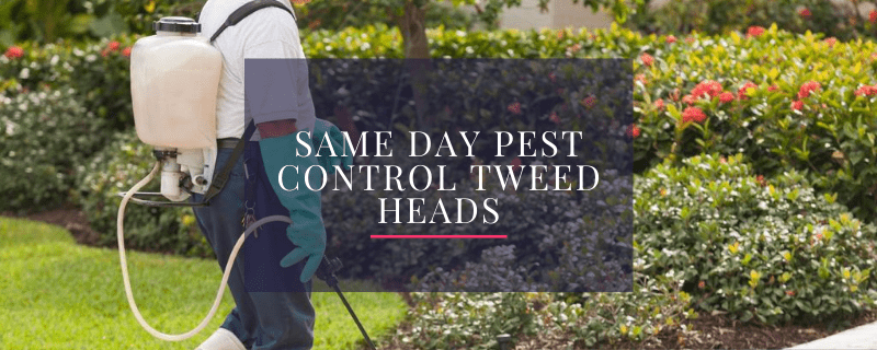 Same-day Pest Control Tweed Heads